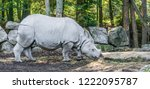indian rhinoceros closeup...   Shutterstock . vector #1222095787