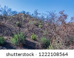 New Bushes Grow On Hillsides...