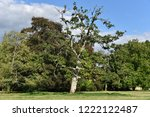 scenic view of trees in a large ... | Shutterstock . vector #1222122487