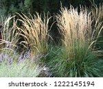 Karl Foerster Grass  ...