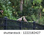mourning dove bird perched on... | Shutterstock . vector #1222182427