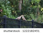 mourning dove bird perched on... | Shutterstock . vector #1222182451
