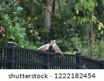 mourning dove bird perched on... | Shutterstock . vector #1222182454