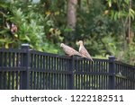 mourning dove bird perched on... | Shutterstock . vector #1222182511