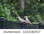 mourning dove bird perched on... | Shutterstock . vector #1222182517