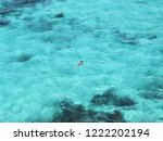 solitary swimmer on the...   Shutterstock . vector #1222202194