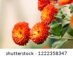 sunny autumn bright orange... | Shutterstock . vector #1222358347