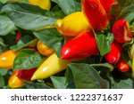 plant detail with red and... | Shutterstock . vector #1222371637