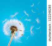 overblown dandelion with seeds... | Shutterstock . vector #122248285