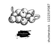 cranberry drawing. isolated... | Shutterstock . vector #1222519387