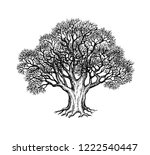 ink sketch of oak without...   Shutterstock .eps vector #1222540447