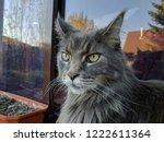 old cat watcher | Shutterstock . vector #1222611364