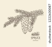 spruce  branch of spruce with... | Shutterstock .eps vector #1222630087