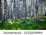 deep forest trees moss... | Shutterstock . vector #1222654894