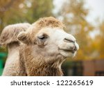 Close Up Photo Of Camel Head I...