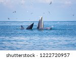 bryde's whale eating small fish ... | Shutterstock . vector #1222720957