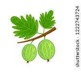 green gooseberry brunch vector... | Shutterstock .eps vector #1222743724