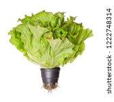 batavia red  living salad ... | Shutterstock . vector #1222748314
