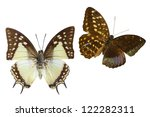 butterfly on white | Shutterstock . vector #122282311