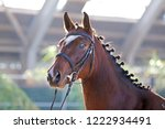 headshot close up of a... | Shutterstock . vector #1222934491