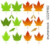 Vector Maple Leaves And Seed...