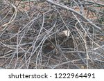 felled tree branches  felling ... | Shutterstock . vector #1222964491