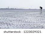 birdwatcher counting birds in... | Shutterstock . vector #1223029321