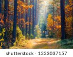 autumn forest with red yellow... | Shutterstock . vector #1223037157