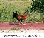 rooster foraging on walkway...   Shutterstock . vector #1223346511