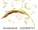 paddy on white background | Shutterstock . vector #1223365717