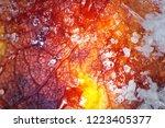 late autumn. frozen autumn... | Shutterstock . vector #1223405377