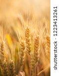 wheat in the farm | Shutterstock . vector #1223413261