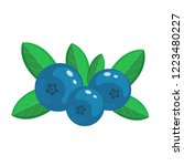 blueberry  vector illustration... | Shutterstock .eps vector #1223480227