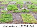 healthy grass growing in soil... | Shutterstock . vector #1223541061