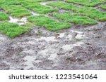 healthy grass growing in soil... | Shutterstock . vector #1223541064