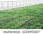 healthy grass growing in soil... | Shutterstock . vector #1223541067