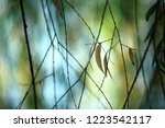 beautiful leaves of the...   Shutterstock . vector #1223542117
