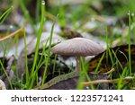Little Brown Mushroom On The...