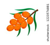sea buckthorn  vector... | Shutterstock .eps vector #1223576881
