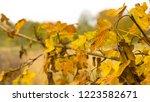 beautiful autumn landscape with ... | Shutterstock . vector #1223582671