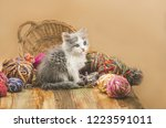 Stock photo young adorable kitten is playing with ball of knitting cute kitten and ball of thread portrait of 1223591011