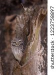 spot owlet in the wood hollow | Shutterstock . vector #1223758897