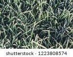 a green grass in frost   Shutterstock . vector #1223808574