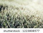 a green grass in frost   Shutterstock . vector #1223808577