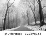 Winter Park Trees In Fog In...