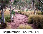 A dry creek bed runs through a stand of eucalyptus trees and grass in Alice Springs, Northern Territory, Australia.