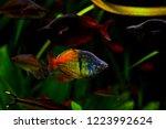 Freshwater Aquarium Fish ...