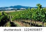 orange nsw vineyard  this area... | Shutterstock . vector #1224050857