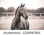 equine portrait all seasons | Shutterstock . vector #1224067801