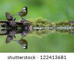 a photo of a songbird   Shutterstock . vector #122413681
